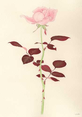赤い葉の薔薇